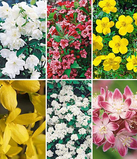 5 Meter Blüh-Hecken-Kollektion,6 Pflanzen