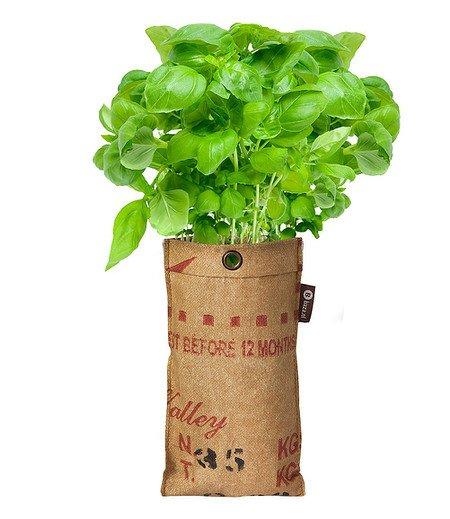 Baza Seeds Mini-Garten BIO-Basilikum,1 Komplett-Set