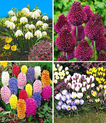 Bienenfreundliche Zwiebelblumen,147 Zwiebeln