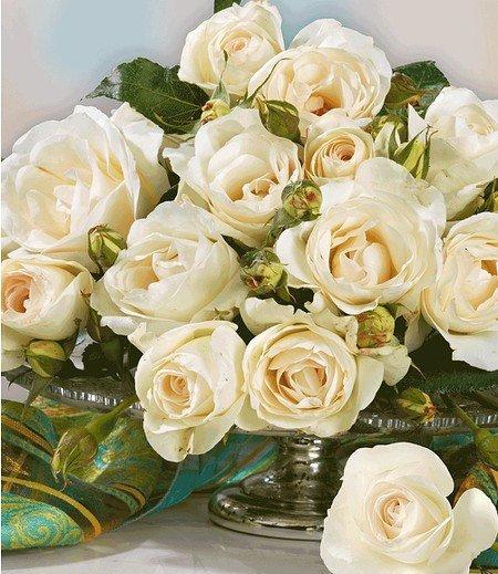 "Delbard Parfum-Rose ""Grand Nord®"",1 Pflanze"