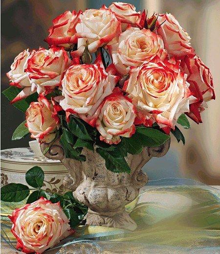 "Delbard Parfum-Rose ""Impératrice Farah®"",1 Pflanze"