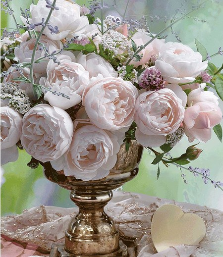 "Delbard Parfum-Rose ""Vichy®"",1 Pflanze"