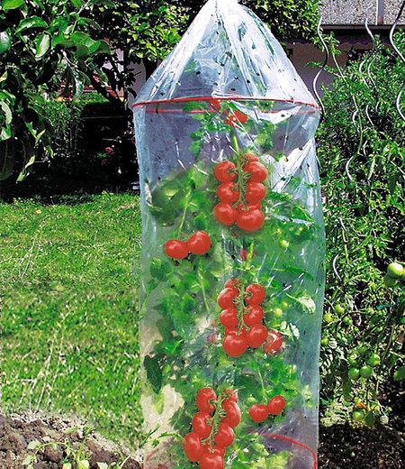 Dinies Deko & Gartenartikel Tomaten-Reifehaube,1 Stück