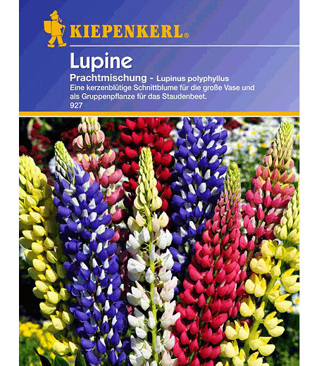 """Kiepenkerl Lupine """"Russels Mix"""",1 Portion"""