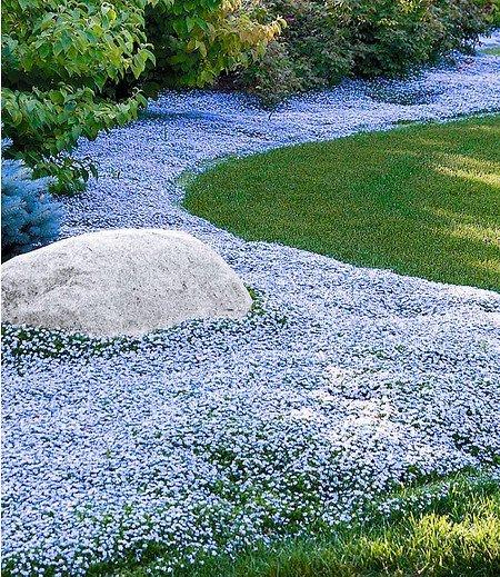 """Mein schöner Garten Bienenfreundliches Bodendecker-Set """"Himmlisches Blau"""" , 15 Pflanzen"""