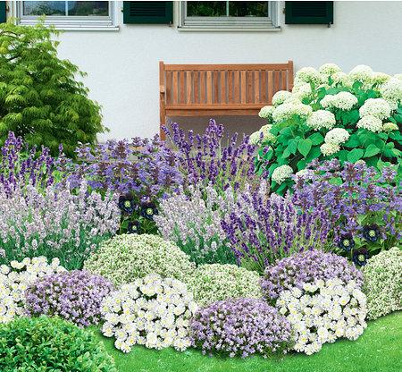 Mein schöner Garten Bienenfreundliches Staudenbeet, 19 Pflanzen