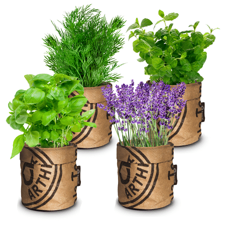 Mein schöner Garten Bio Kräuter-Mix 4er-Set