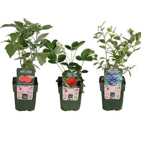 Mein schöner Garten BIO Pflanzen-Set Beerenfreude