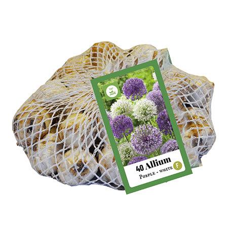 Mein schöner Garten Blumenzwiebel Allium-Mix