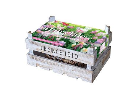 Mein schöner Garten Blumenzwiebelbox 'A Fairy Tale'