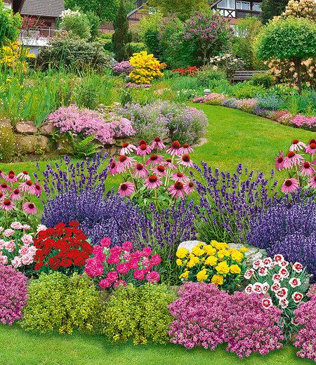 Mein schöner Garten Duftendes Staudenbeet, 22 Pflanzen