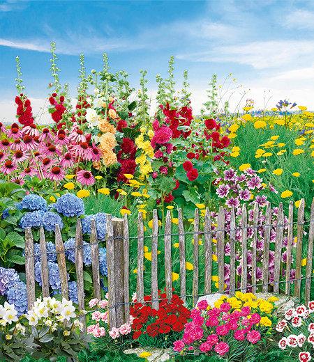 """Mein schöner Garten Staudenbeet """"Bauerngarten"""", 20 Pflanzen"""