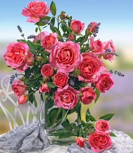 """Parfum-Rose """"Génération Jardin®"""",1 Pflanze"""