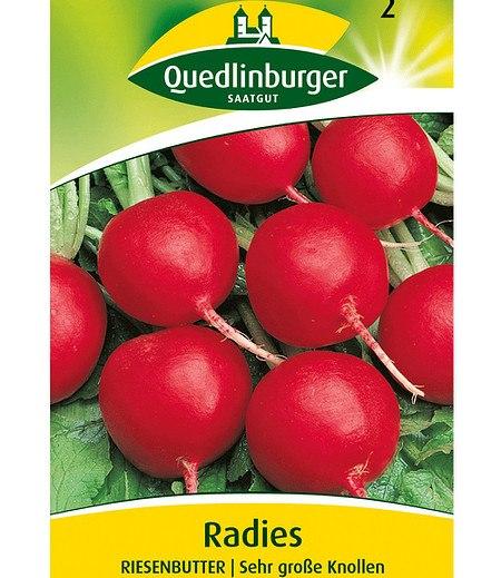 """Quedlinburger Radies """"Riesenbutter"""",1 Portion"""