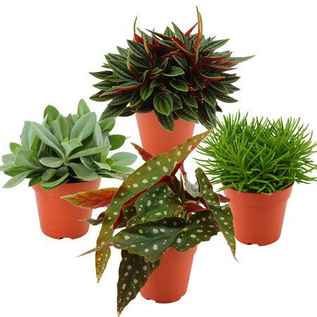 "Sense of Home Zimmerpflanzen-Set ""Botanical Charm"""