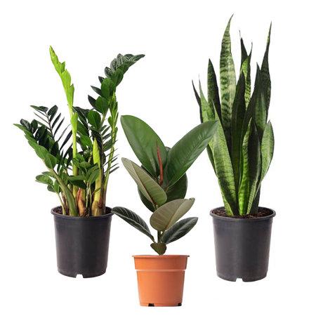 "Sense of Home Zimmerpflanzen-Set ""Evergreen"""