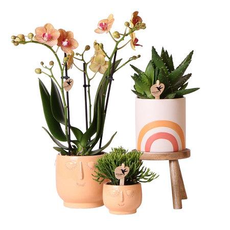 "Sense of Home Zimmerpflanzen-Set ""Happy Orchid"""