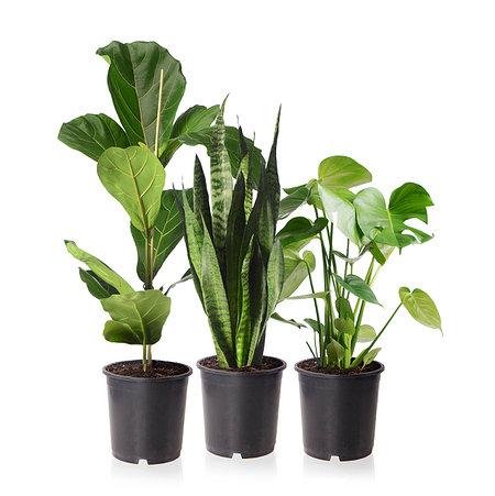 Sense of Home Zimmerpflanzen-Set Urban Jungle