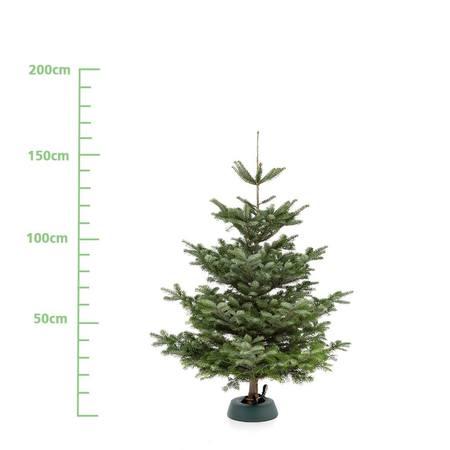 Weihnachtsbaum L (ca. 150 cm)