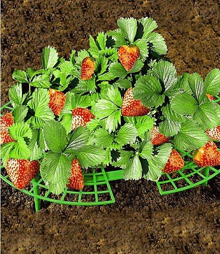 WENKO Erdbeer-Reifer,5 Stück