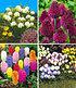 Bienenfreundliche Zwiebelblumen,147 Zwiebeln (1)