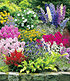 "Buntes Staudenbeet ""Multi-Colour"",12 Pflanzen (1)"
