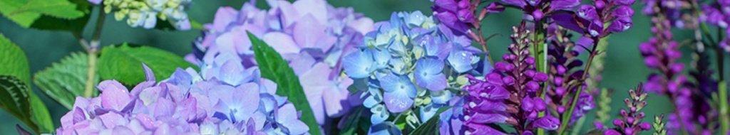 Kategorie Farbtupfer in Rosa und Violett