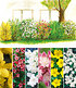 5 Meter Blüh-Hecken-Kollektion,6 Pflanzen (2)