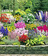 "Buntes Staudenbeet ""Multi-Colour"",12 Pflanzen (2)"
