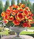 "Delbard Kletter-Rose ""Parure d'or®"",1 Pflanze (2)"