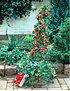 Kletter-Erdbeere 'Hummi®' und Dekorativer Rankturm,1 Set (8)