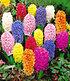 Bienenfreundliche Zwiebelblumen,147 Zwiebeln (4)