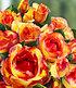 "Delbard Kletter-Rose ""Parure d'or®"",1 Pflanze (3)"