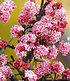 Mein schöner Garten Bienenfreundliche Hecke im Set, 5 Pflanzen (3)